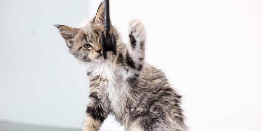 dierenarts zuidlaren konijn kat hond