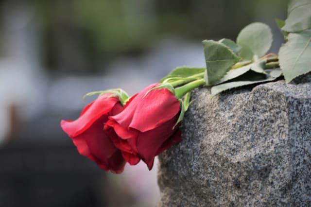 Fotographie zweier roter Rosen auf einem Stein.