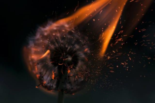 Fotographie einer brennenden Pusteblume.