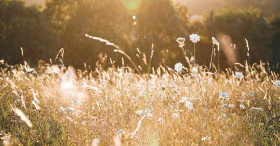 Fotographie einer naturbelassenen Wiese mit Sonnenbokeh.