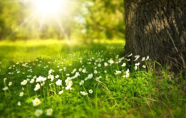 Fotographie eines Baumes auf einer Frühlingswiese mit Gänseblümchen.