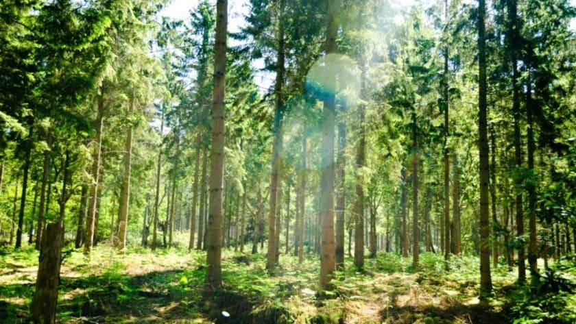 Fotographie einer Waldlichtung im Sonnenschein.