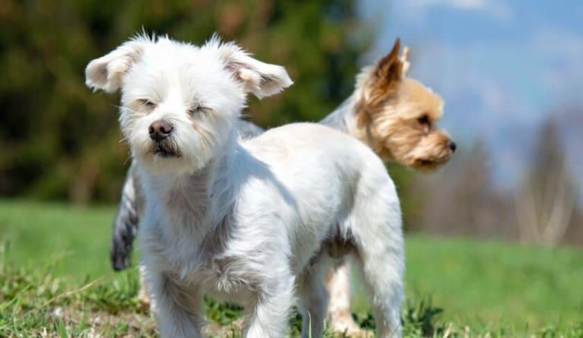 Zwei spielende Hunde