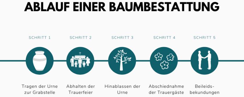 ABLAUF EINER BAUMBESTATTUNG.png