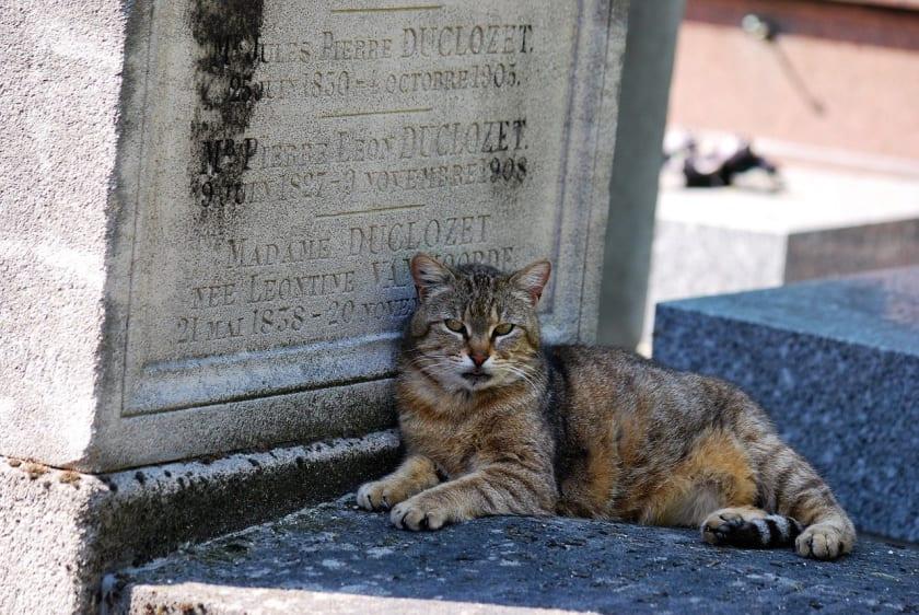 Katze auf Friedhof