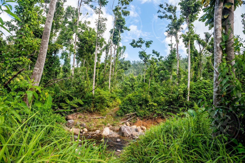 Dominica river