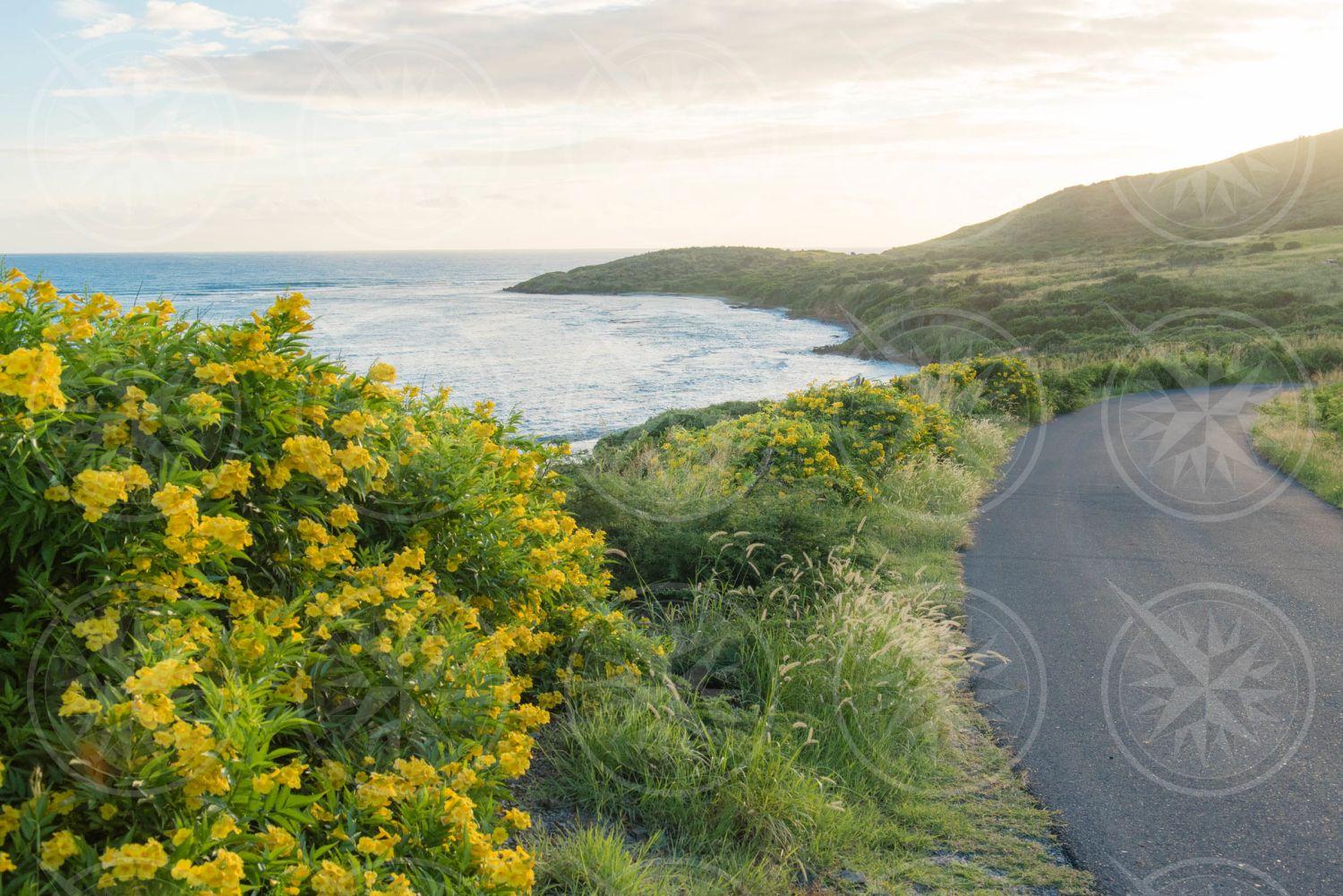 Road to Point Udall, St. Croix
