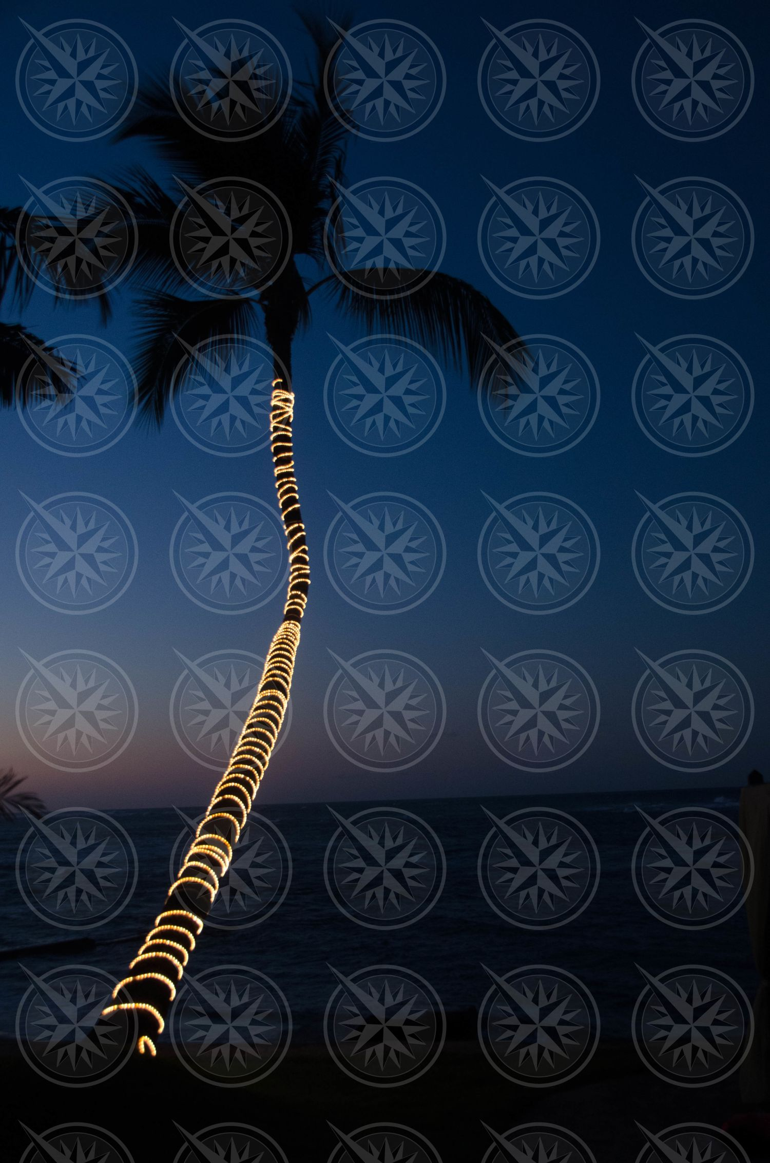 Coconut palm tree with Christmas lights