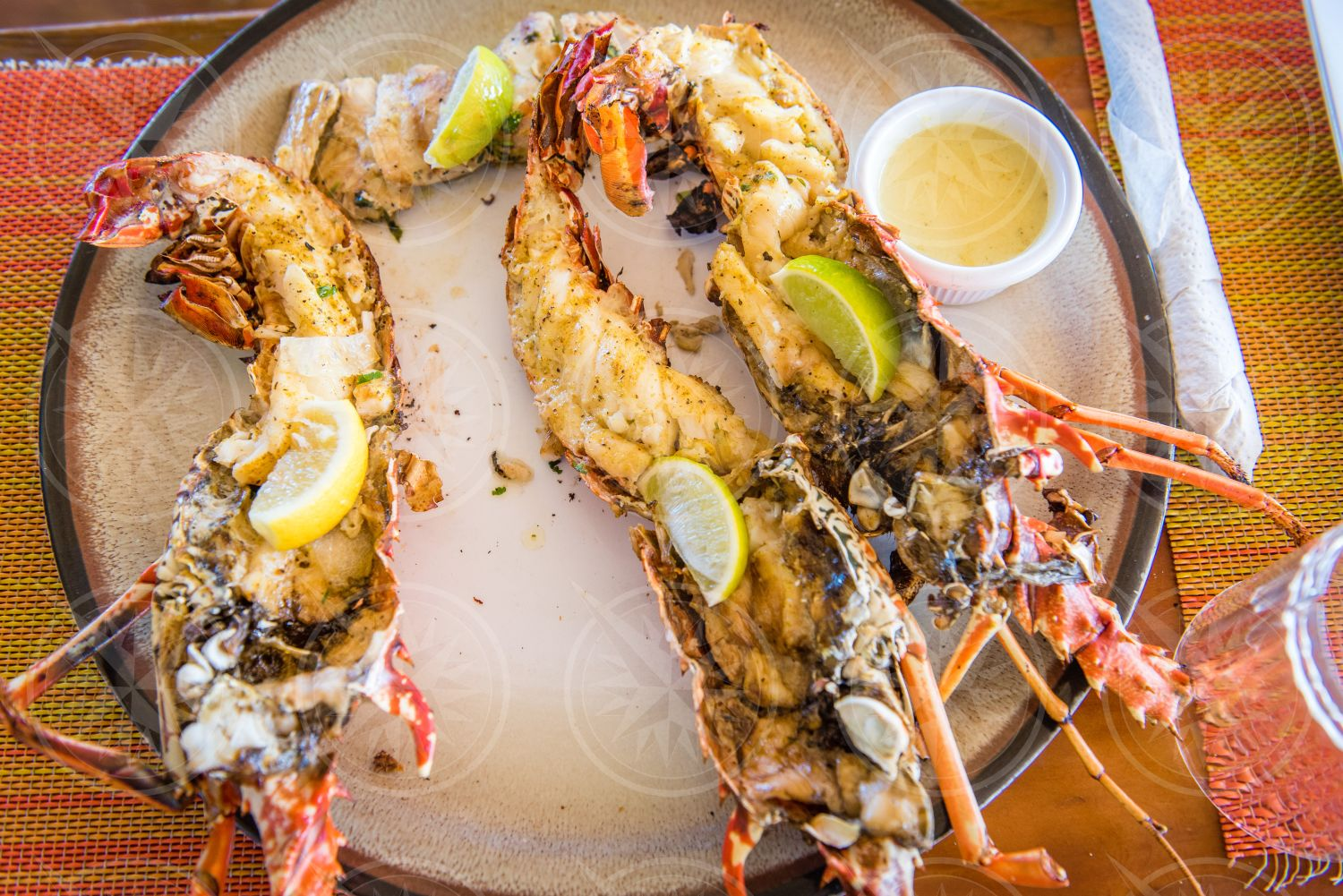 """Anguilla """"Crayfish"""" or Spotted Lobster"""