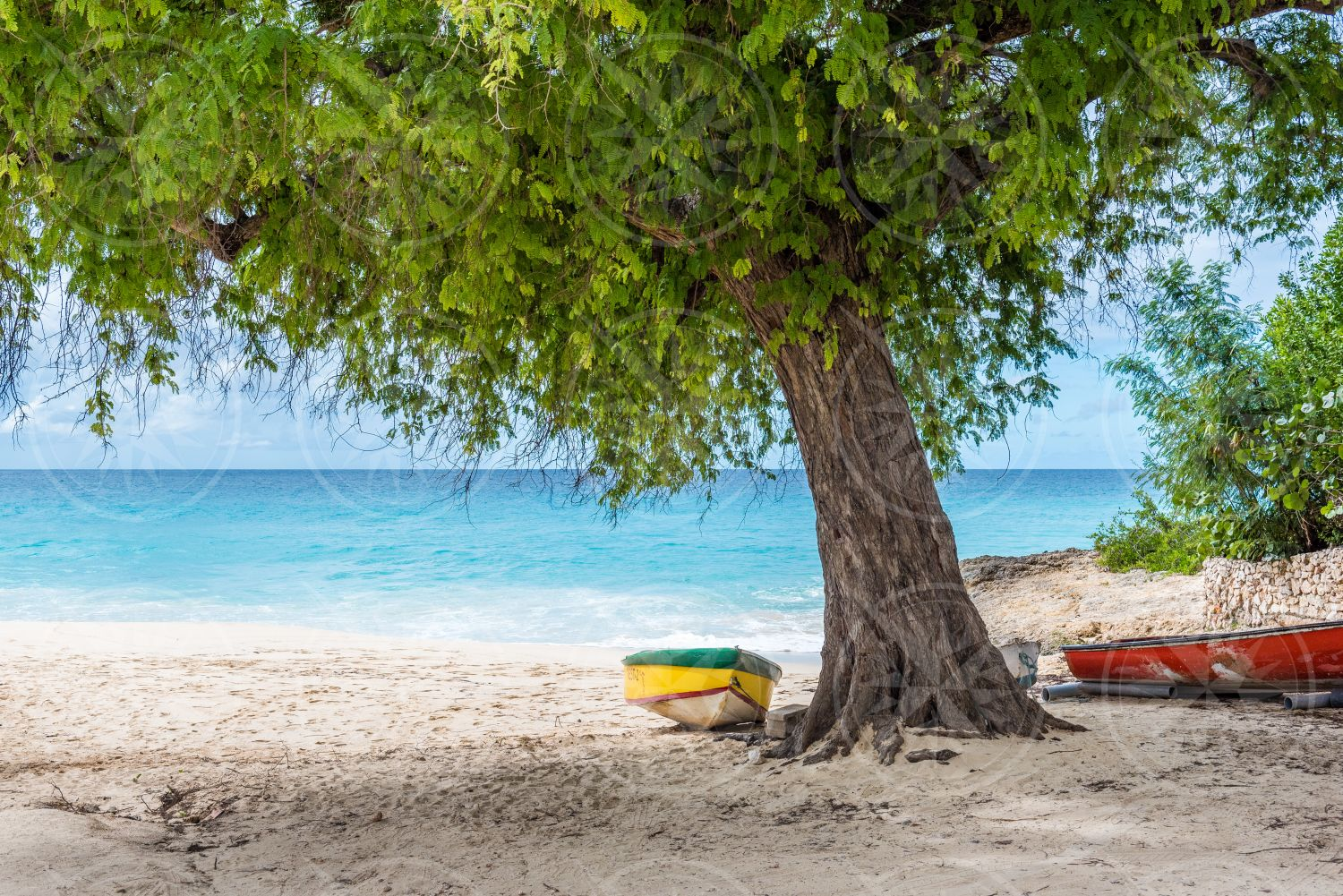 Boat under a tamarind tree on Meads Bay