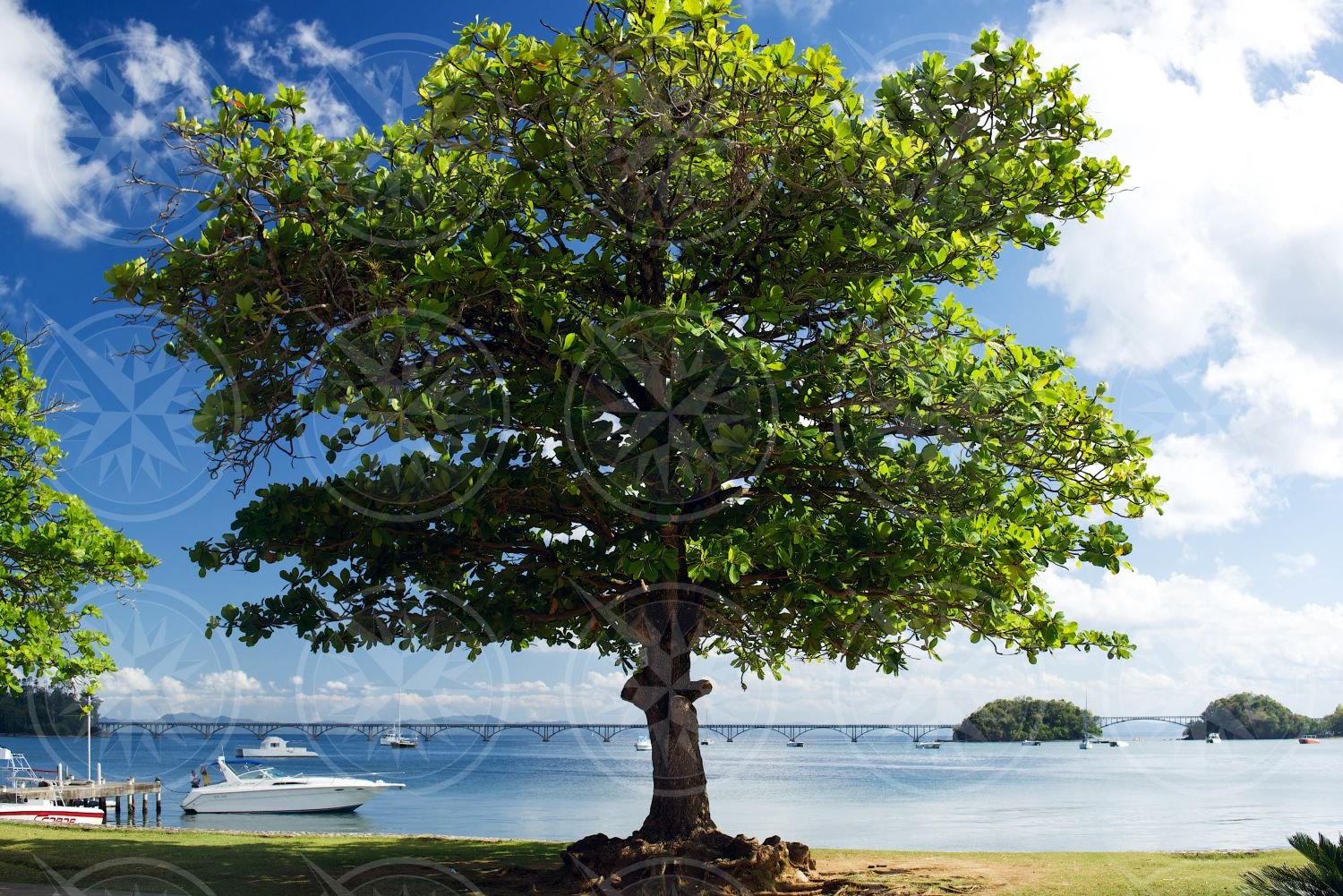 Tree in Samana, Dominican Republic