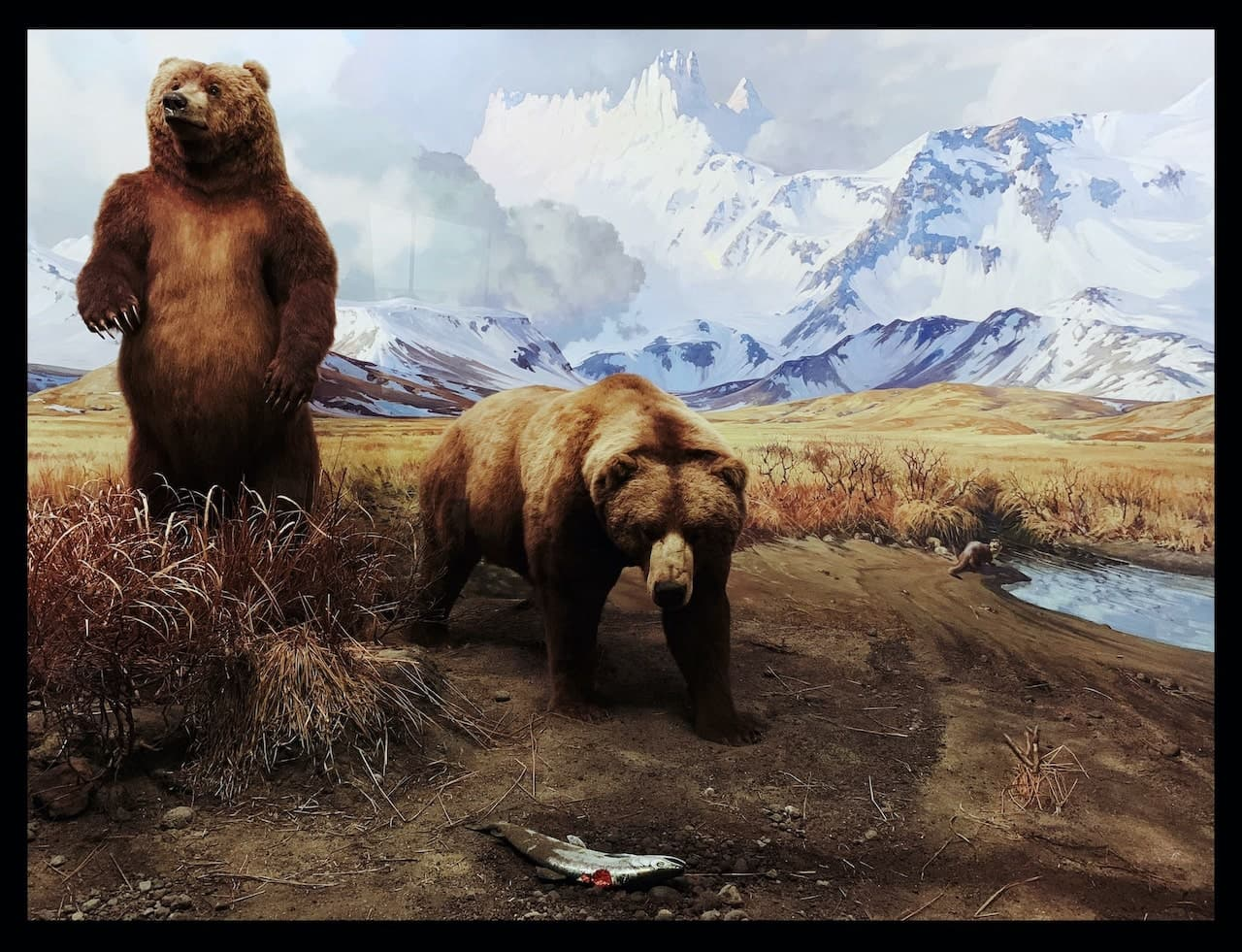 image of bears from a natural history museum exhibit