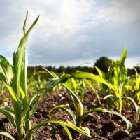 Prodotti per l'agricoltura e per gli animali