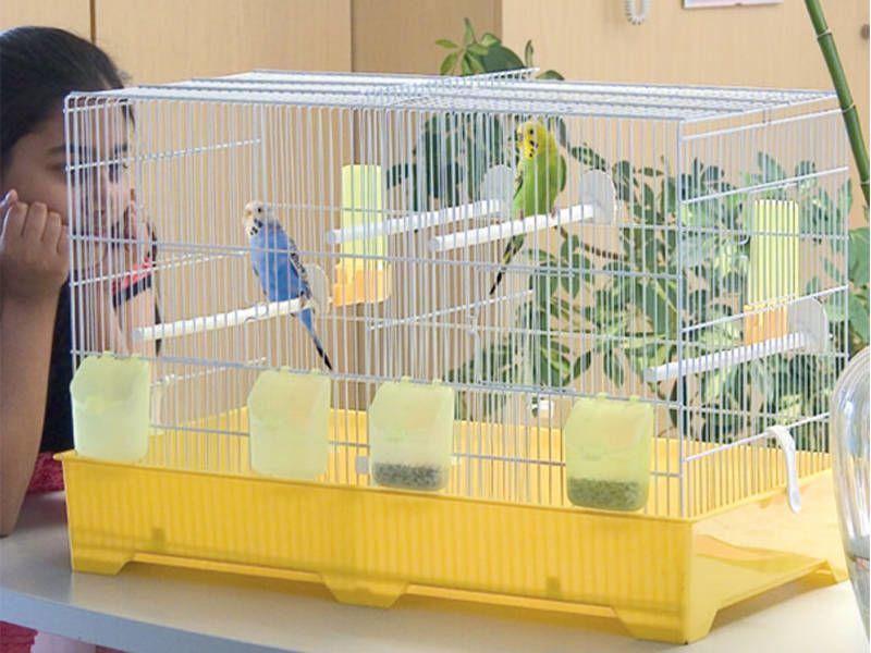Marchioro Cova 67 gabbia uccellini canarini 67x34x42 cm
