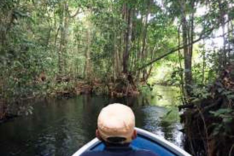 Nikmati Wisata Alam Liar Taman Nasional Sebangau Kalimantan Tengah