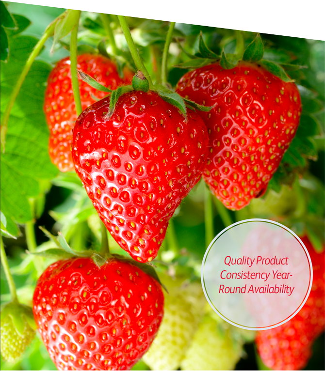 Quality strawberries snhvlc