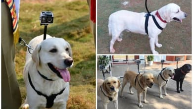 Photo of Sniffer dogs with cameras! Meet Indian Railways' unique 'security personnel' at the Visakhapatnam station