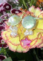 Stella Freshwater Pearl Earrings