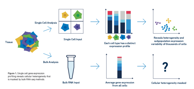 Single cell analysis reveals cellular heterogeneity that is masked by bulk methods. CREDIT: 10x Genomics, LIT000027 Getting Started with Single Cell Gene Expression.