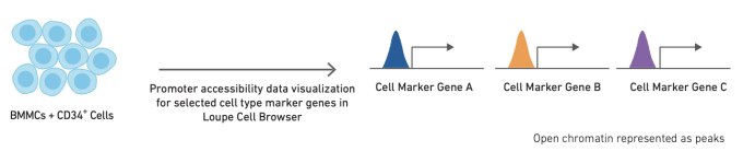 Annotation using cell type-specific cis-regulatory elements. CREDIT: 10x Genomics, CG000234 Cell Type Annotation Strategies for Single Cell ATAC-Seq Data.