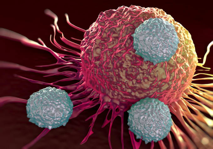 T cells (shown in gray) attacking cancer cells. CREDIT: La Jolla Institute for Allergy and Immunology.