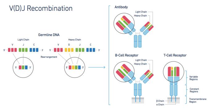 VDJ diagram from flyer