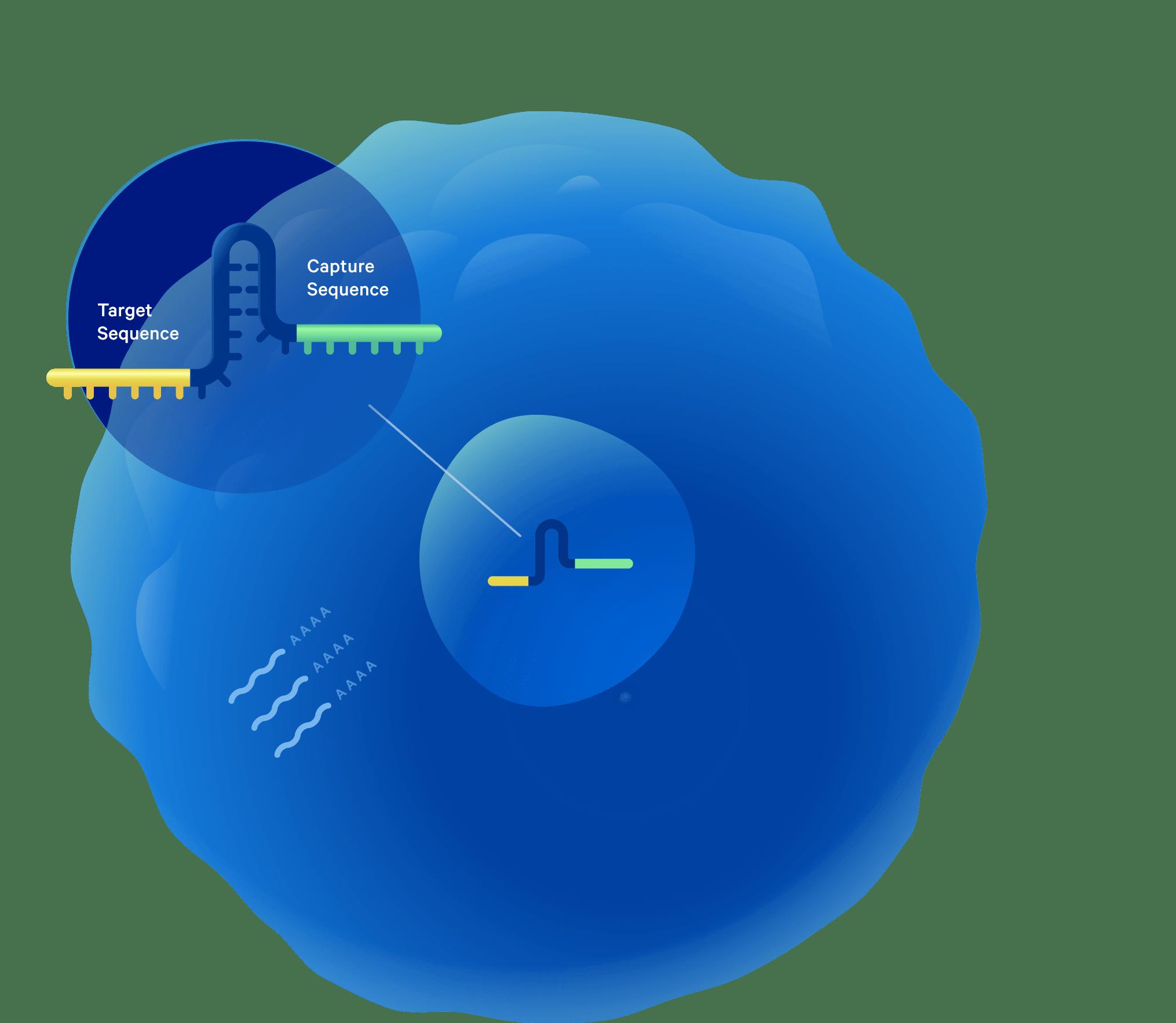 Single Cell CRISPR Screening