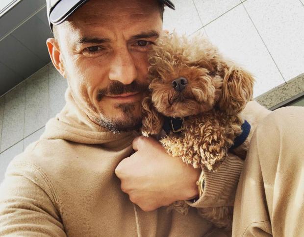 Орландо Блум огорчен: актер попросил поклонников помочь найти пропавшего питомца