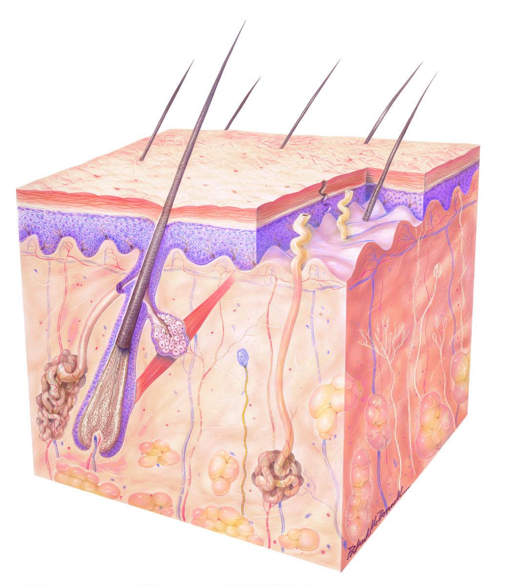 Dermatological Health