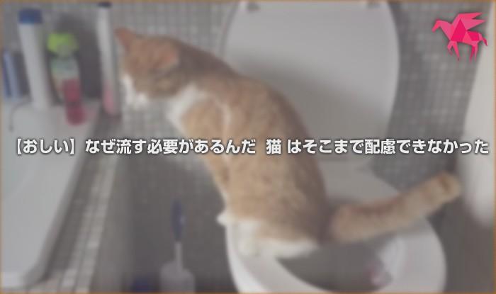 【おしい】なぜ流す必要があるんだ 猫 はそこまで配慮できなかった