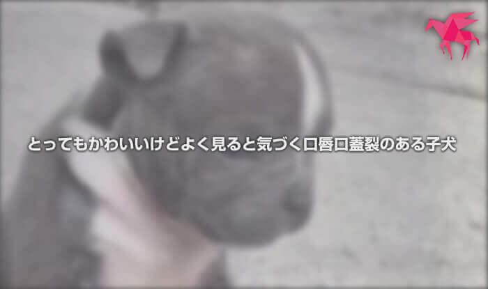 とってもかわいいけどよく見ると気づく口唇口蓋裂のある子犬