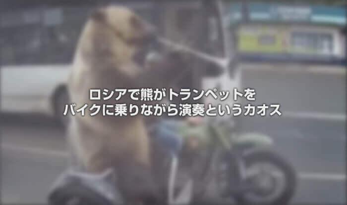 ロシアで熊がトランペットをバイクに乗りながら演奏というカオス