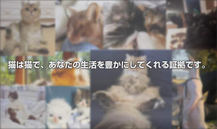 猫は猫で、あなたの生活を豊かにしてくれる証拠です。