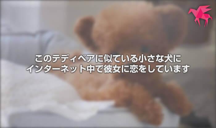 このテディベアに似ている小さな犬にインターネット中で彼女に恋をしています