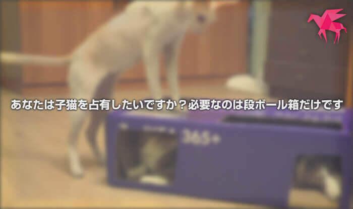 あなたは子猫を占有したいですか?必要なのは段ボール箱だけです