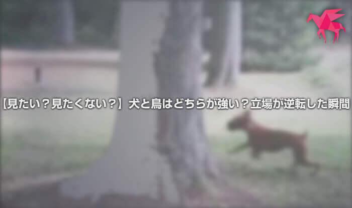 【見たい?見たくない?】犬と鳥はどちらが強い?立場が逆転した瞬間