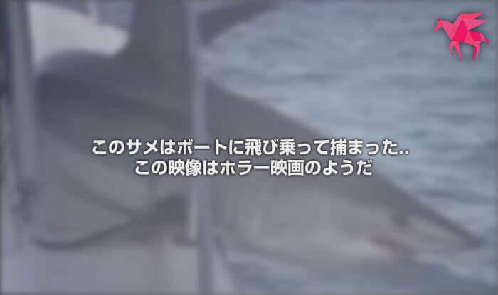 このサメはボートに飛び乗って捕まった.. この映像はホラー映画のようだ