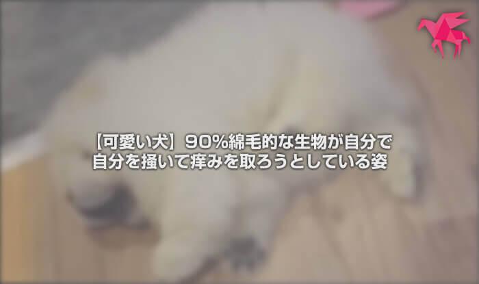 【可愛い犬】90%綿毛的な生物が自分で自分を掻いて痒みを取ろうとしている姿