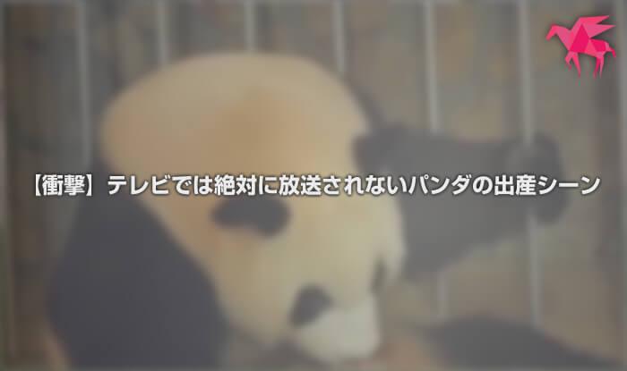 【衝撃】テレビでは絶対に放送されないパンダの出産シーン