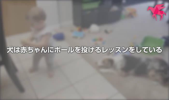 犬は赤ちゃんにボールを投げるレッスンをしている