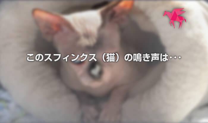 このスフィンクス(猫)の鳴き声は・・・