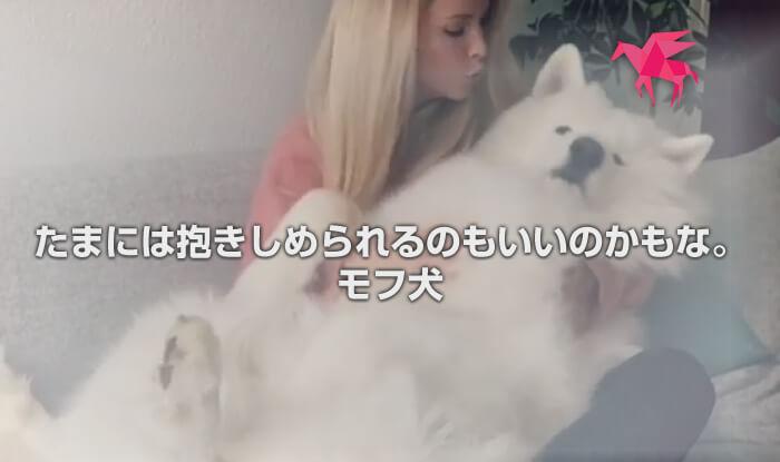たまには抱きしめられるのもいいのかもな。モフ犬