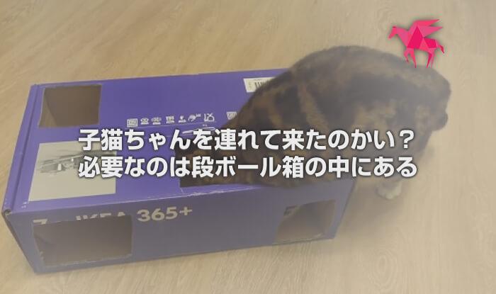 子猫ちゃんを連れて来たのかい? 必要なのは、段ボール箱の中にある