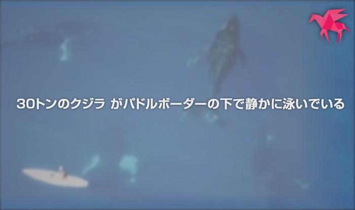 【大迫力】 30トンのクジラ がパドルボーダーの下で静かに泳いでいる