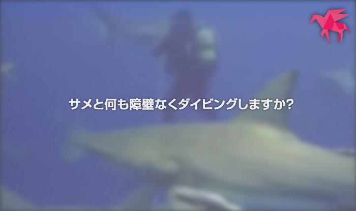 サメと何も障壁なくダイビングし