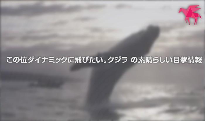 この位ダイナミックに飛びたい。クジラ の素晴らしい目撃情報