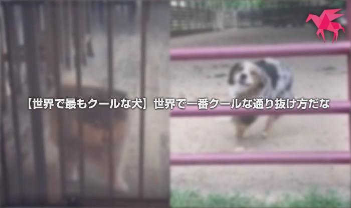 【世界で最もクールな犬】世界で一番クールな通り抜け方だな