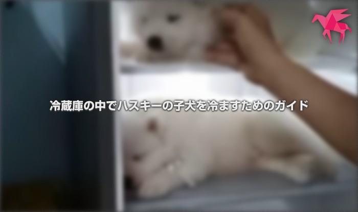 冷蔵庫の中でハスキーの子犬を冷ますためのガイド