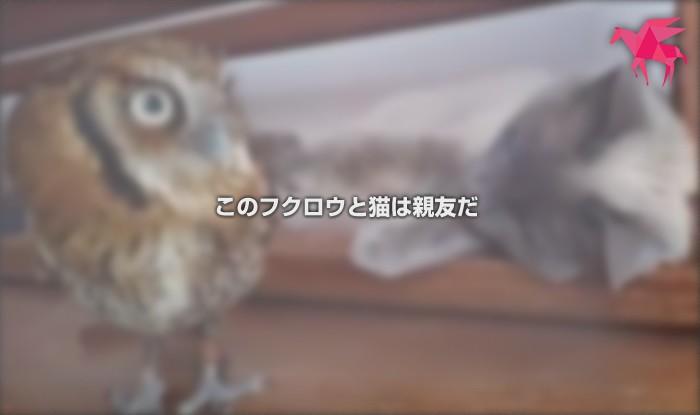 このフクロウと猫は親友だ