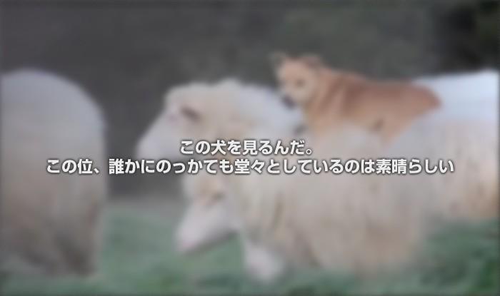 【牧羊犬】この犬を見るんだ。この位、誰かにのっかても堂々としている